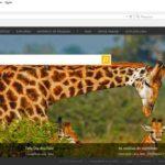 Qual a diferença entre os buscadores Bing e Google?